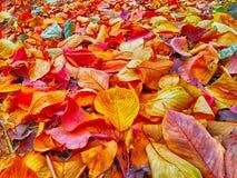 Autumn Leafs unter dem Baum, Suyeong-Fluss, Busan, Südkorea stockfoto