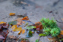 Autumn leafs in water creek Royalty Free Stock Image