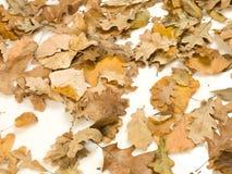 Autumn leafs. On white background Stock Photos