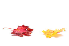 Autumn leafs on white background Royalty Free Stock Images