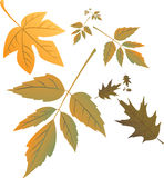 Autumn leafs in wind. Illustration Stock Photography