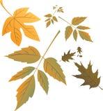 Autumn leafs in wind. Illustration vector illustration