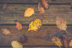 Autumn leafs on a wooden background Royalty Free Stock Photo