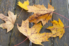 Autumn leafs on a wooden bank Royalty Free Stock Photography