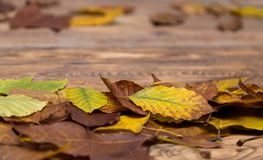 Autumn leafs on wooden blurred background. Some colorful autumn leafs fell from the trees lying on wooden floor Royalty Free Stock Images