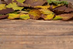 Autumn leafs on wooden blurred background. Some colorful autumn leafs fell from the trees lying on wooden floor Royalty Free Stock Photos