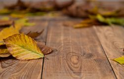 Autumn leafs on wooden blurred background. Some colorful autumn leafs fell from the trees lying on wooden floor Stock Photo
