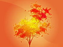 Autumn leafy tree Stock Images
