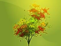Autumn leafy tree Royalty Free Stock Image