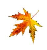 Autumn  leav on white one Stock Photos
