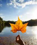 Autumn leave. Royalty Free Stock Photo