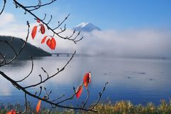 Autumn leave along kawaguchiko lake with Mt Fuji as background Royalty Free Stock Photo