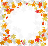 Autumn leave falling Royalty Free Stock Photography