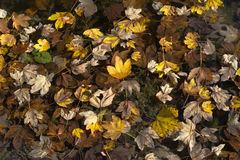 Autumn Leave Fantasy Royalty Free Stock Image