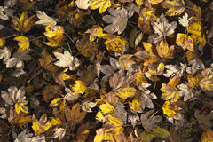 Autumn Leave Fantasy Stock Images