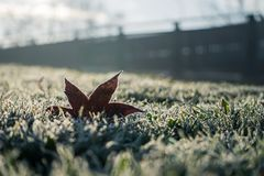 Autumn leave frosted on the iced grass Royalty Free Stock Photography
