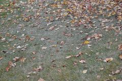 Autumn leave on the grassy ground background Royalty Free Stock Image