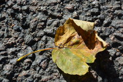 Autumn leave on the ground Royalty Free Stock Images