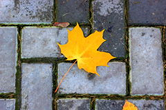Autumn leave. S on the road boke royalty free stock photography