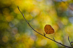 Autumn leave. One leaf left before winter starts. The beautiful autumn colors in a peacefull capture Stock Images