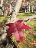 Autumn Leave op boom Stock Foto's