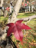 Autumn Leave på träd Arkivfoton