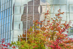 Autumn leave and skyscraper reflect in windows. Royalty Free Stock Photo