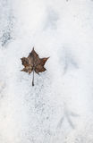 Autumn leave on the snow Royalty Free Stock Images