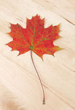 Autumn leave on wooden background texture Stock Images