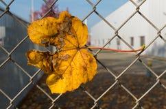 Autumn leave stock photo