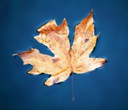 Autumn leaveas Royalty Free Stock Images