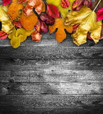 Autumn Leaves över en naturlig mörk träbakgrund arkivfoton