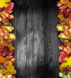 Autumn Leaves över en naturlig mörk träbakgrund fotografering för bildbyråer