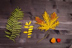 Autumn Leaves över en naturlig mörk träbakgrund Gammal smutsig trätabeller eller parkett med fnuren och hål och åldriga partcular arkivbilder