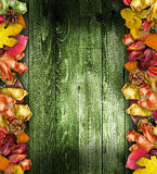 Autumn Leaves över ett naturligt royaltyfri bild