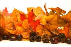 Free Autumn Leaves 03 Royalty Free Stock Photos - 20676958