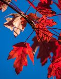 Autumn Leaves fotos de stock