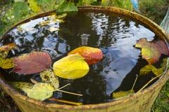 Autumn Leaves Immagini Stock