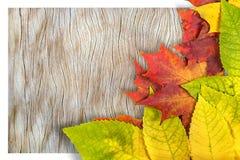 Autumn Leaves imagen de archivo libre de regalías