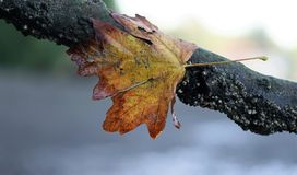 Autumn Leaves Photographie stock libre de droits
