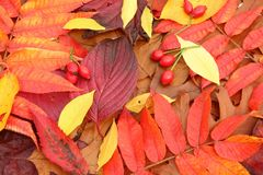Autumn Leaves Fotos de Stock
