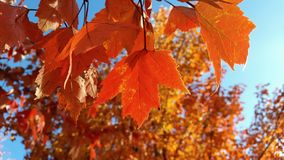 Autumn Leaves Imagens de Stock Royalty Free