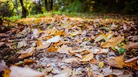 Autumn Leaves Stockbilder