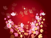 Autumn leaves. Autumn background with different color leaves Royalty Free Stock Images