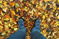 Autumn Leaves Photo libre de droits