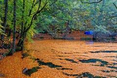 Autumn Leaves Images libres de droits