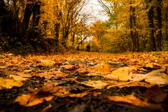 Autumn Leaves photos libres de droits