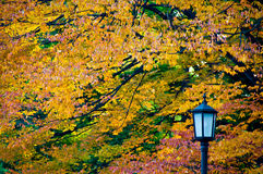 Autumn Leaves. With a lamp post with copy space Royalty Free Stock Photos