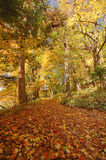 Autumn Leaves. Path covered with autumn leaves through a forrest Stock Photos