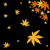 Autumn leaves. On black background Stock Photos